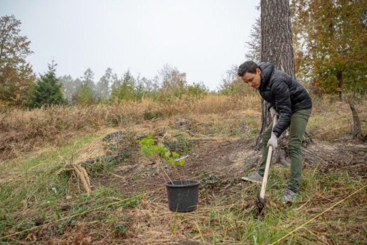 O que é o Manejo Florestal? Qual sua importância para o meio ambiente?